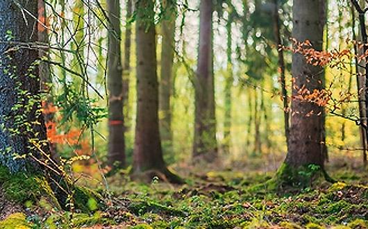 CERAMIN SONO | Forest